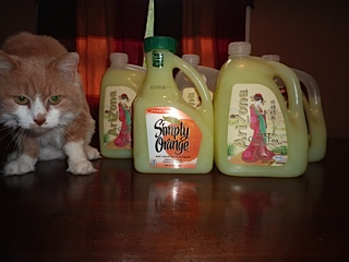 even the cat is impressed with the about of laundry soap we made