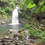 waterfall cockscomb basin