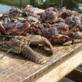 Lobsters and crabs Real Life Recess