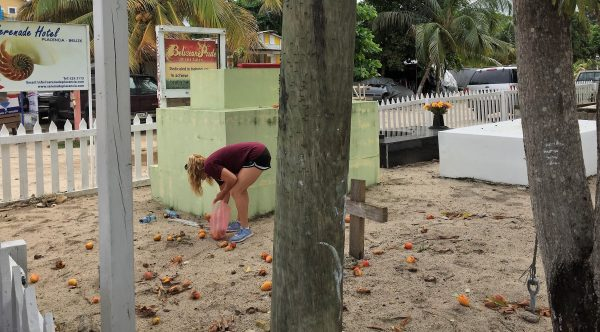 Mango picking in cemetary Real Life Recess