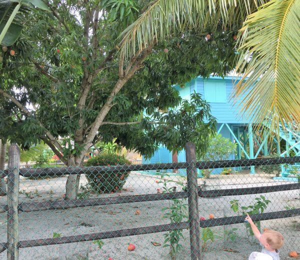 Mitch spotting mango tree Real Life Recess
