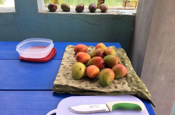 Preparing to Cut Mangos Real Life Recess