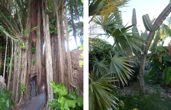 Garden Club trees in Key West- Real Life Recess