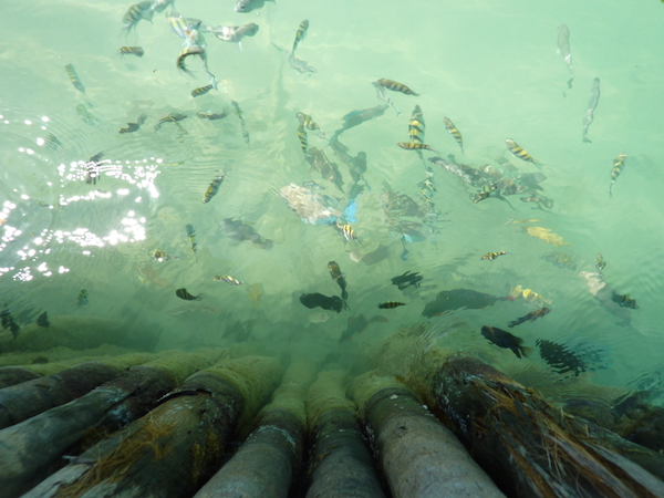 Fish at  the Split at Caye Caulker- Real Life Recess